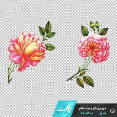 دانلود فایل دوربری شده گل و مرغ سنتی با دو گل در تم رنگی صورتی در ابعاد 600 در 700