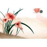 anemone7