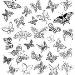 butterfly_pattern16
