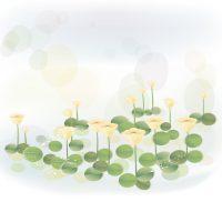 farm_flowers5