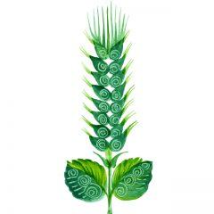 green_wheat13