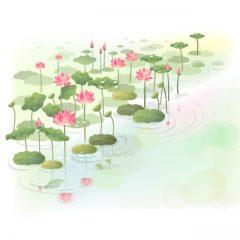 lotus6