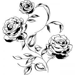 rose_black5