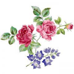 shrub_roses14