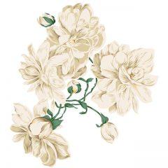 white_rose5