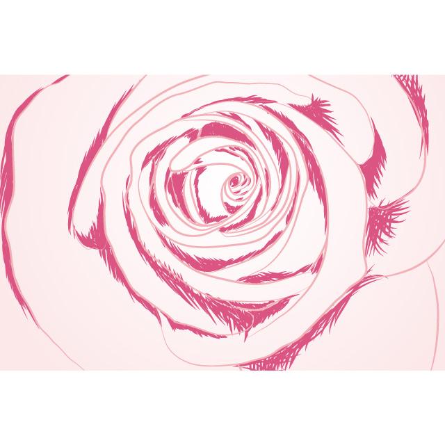 دانلود وکتور گل رز صورتی