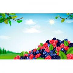 دانلود وکتور میوه های تمشک و شاه توت جنگلی