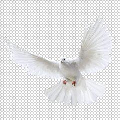 دانلود فایل دوربری شده کبوتر در حال پرواز با کیفیت بالا در ابعاد 2282 در 2772