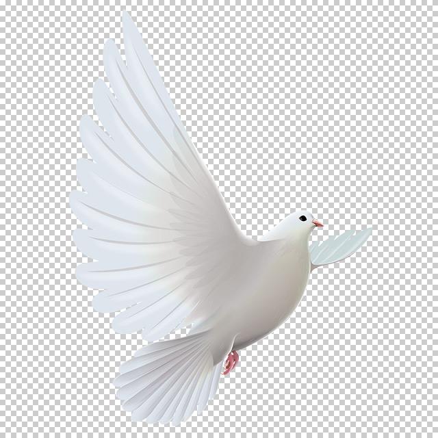 دانلود فایل دوربری شده کبوتر در حال پرواز با کیفیت بالا در ابعاد 5100 در 3900