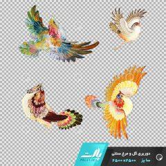 دانلود فایل دوربری شده گل و مرغ سنتی پرنده با رنگ های شاد در ابعاد 2000 در 2000