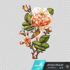دانلود فایل دوربری شده گل و مرغ سنتی شماره 3 در ابعاد 700 در 600