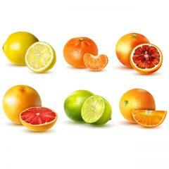 دانلود وکتور تصویر گرافیکی میوه های زمستانی
