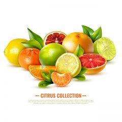 دانلود وکتور پوستر میوه های زمستانی با طراحی خاص و گرافیک بالا