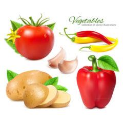 وکتور محصولات کشاورزی ارگانیک