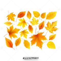 وکتور برگ پاییزی درختان جنگی