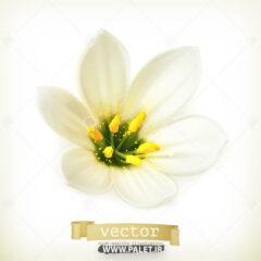 وکتور طرح گل یاس سفید