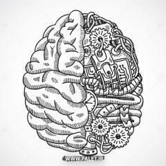 دانلود وکتور مغز انسان و دو نیم کره